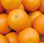 San Dimas Citrus Display & Tasting